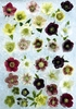 Hellebore Collection jigsaw puzzle