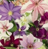 Clematis Large square notebook