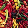 Chilli Peppers Large square notebook