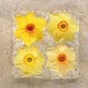 Daffodil Heads Large square notebook