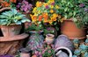 Whichford Terracotta Pots jigsaw puzzle