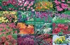 Colour for all Seasons jigsaw puzzle